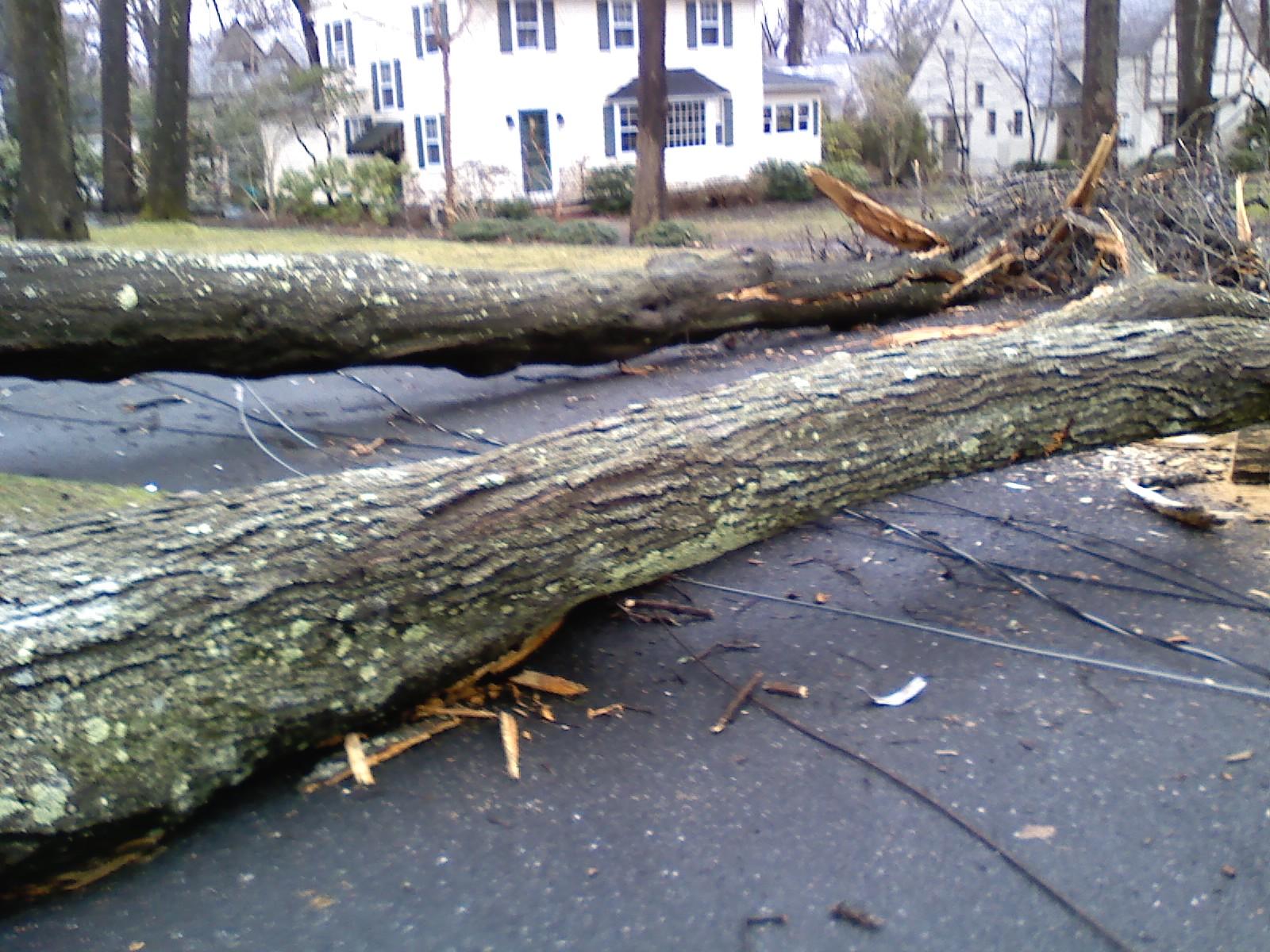 Fallen tree in driveway